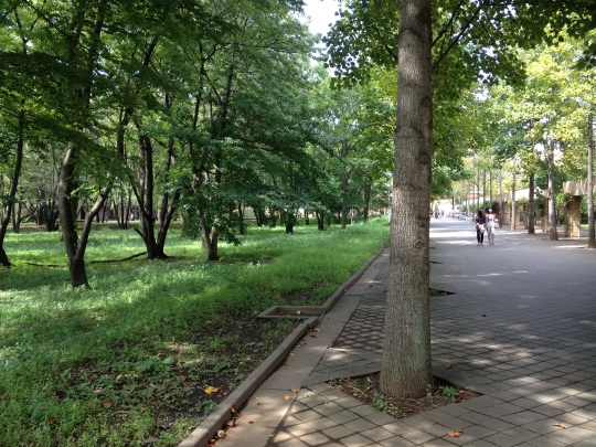 This is a lovely road to the main part of the campus, my main lecture building being on the right.