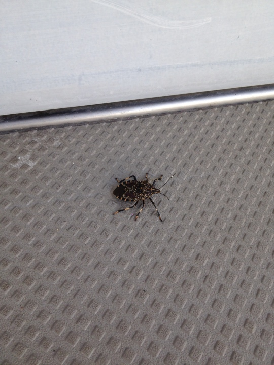 Creepy bug that was chilling outside my door this morning. Blegh.