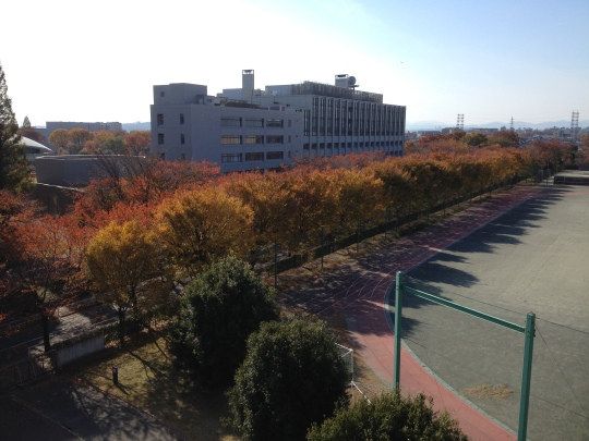 Another look at the Autumn colours from my room