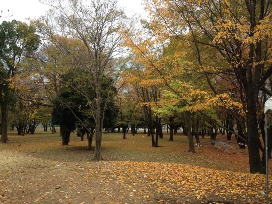 More Autumn!