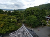 It's very green in Kyoto. Less so in Tokyo
