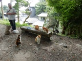 This man feeds all these cats every day. It was really fun to watch
