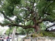 This tree is amazing!