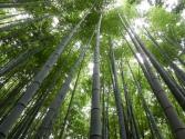 bamboo tops!